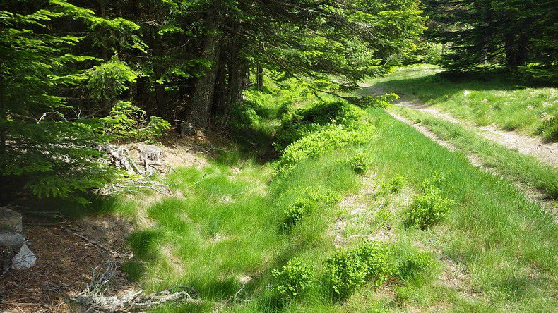 La forêt de Taillard