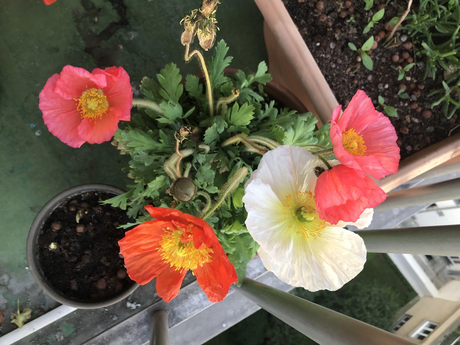 l'une de mes fleurs préférées est ...