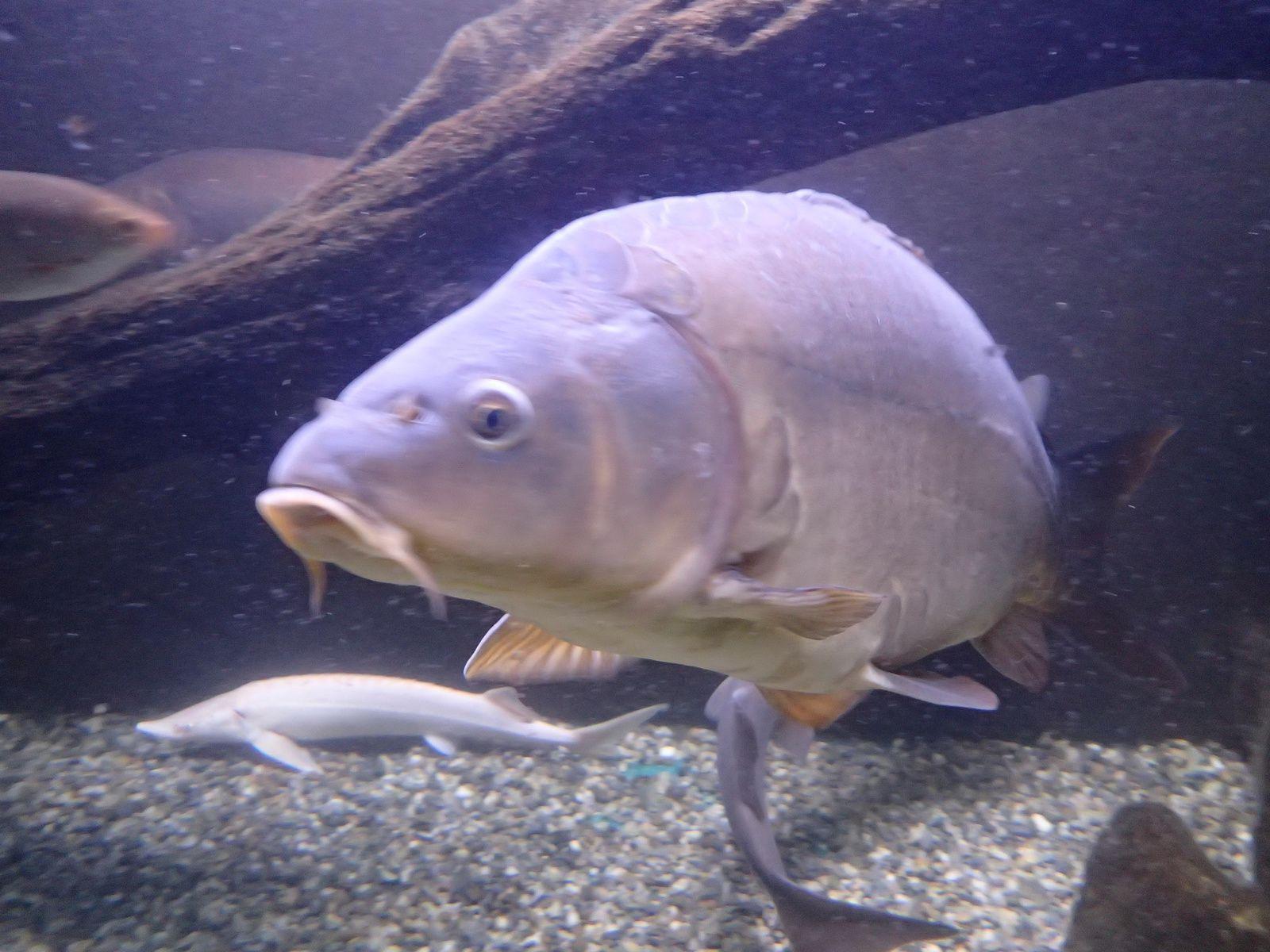 Aquarium du Lac du Bourget