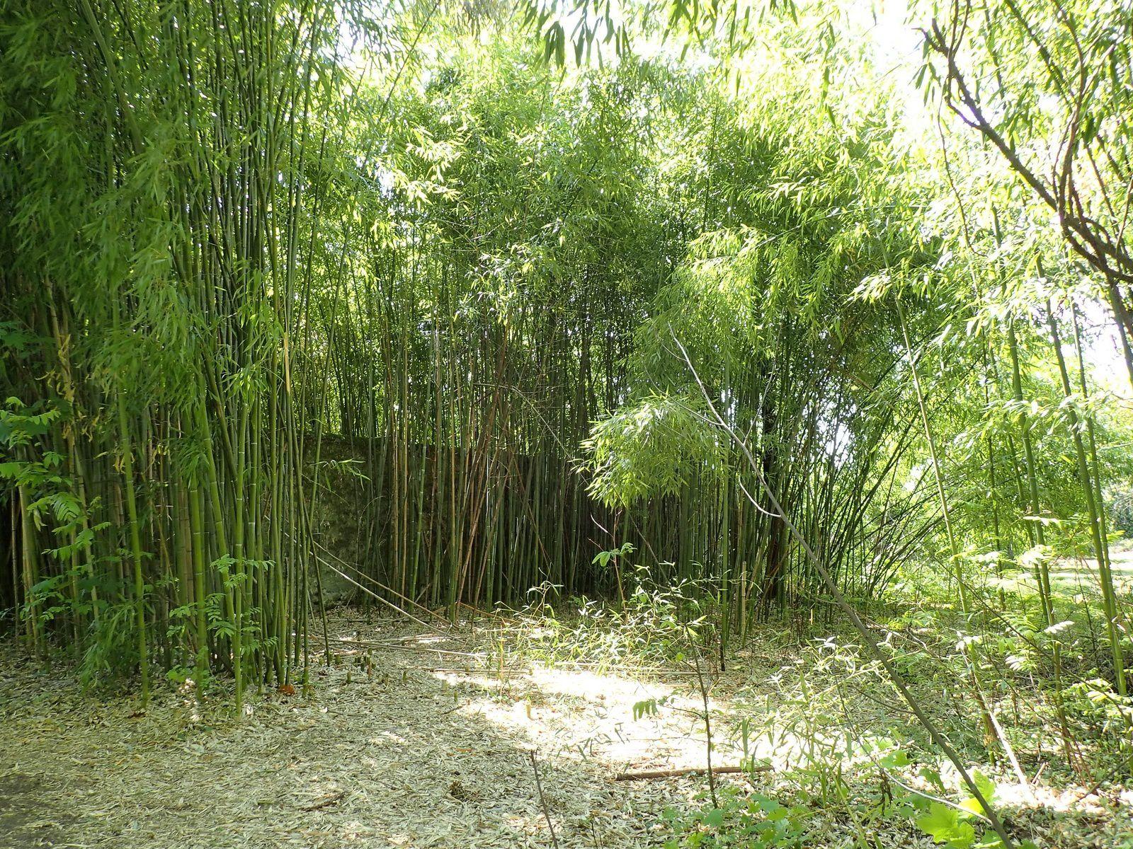 Lac Léman : Forêt de la Ripaille