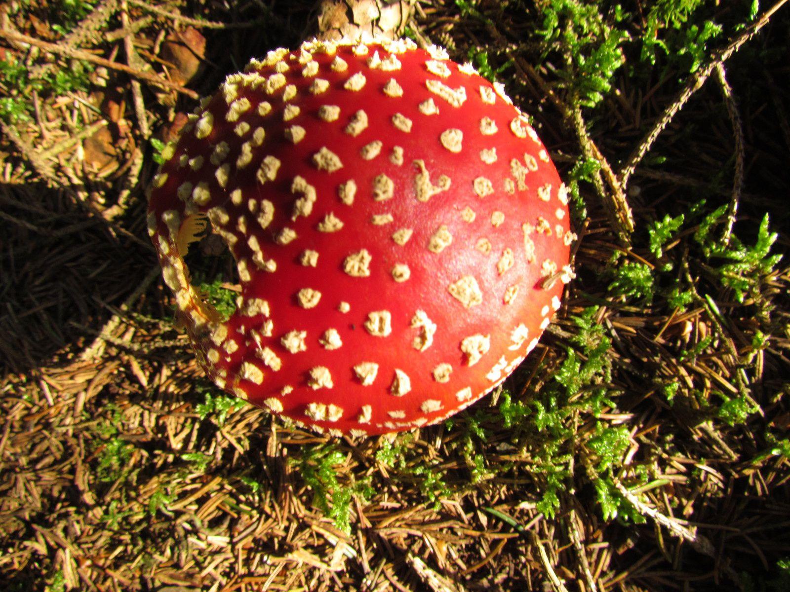 Balade champignons et leur donner un nom.