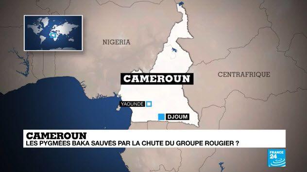 Cameroun : la chute du groupe Rougier, une bonne nouvelle pour les pygmées Baka ?