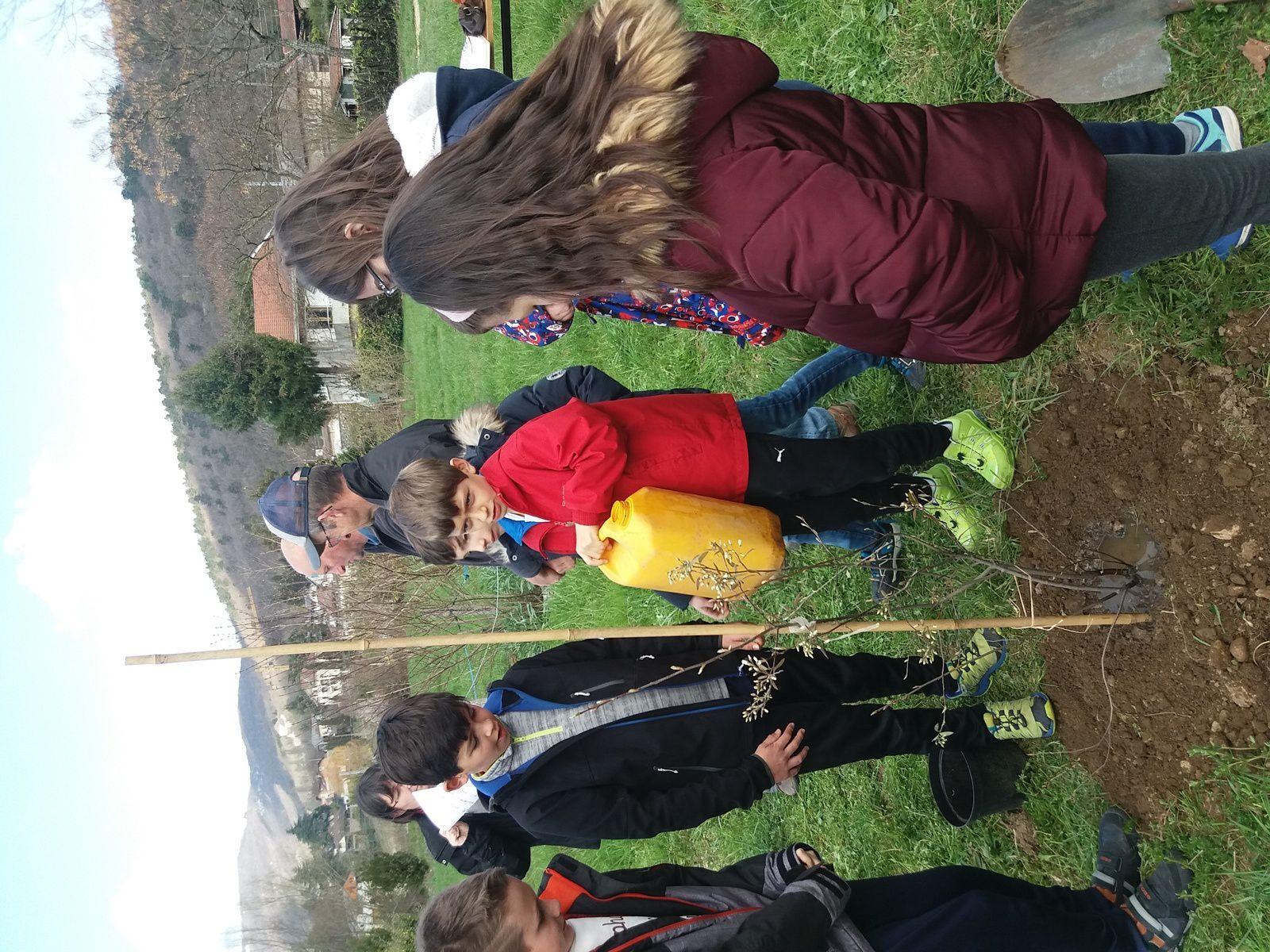 Lundi après-midi, une quarantaine d'élèves des classes de CM1 & CM2 de l'école de Brison St Innocent, coachés par les élèves de 6e du collège Garibaldi, ont planté un amélanchier du Canada. Quelques uns d'entre eux ont lu les poèmes japonais très courts (haïku) qu'ils avaient composés pour cette manifestation bien sympathique. Suivait un jeu de piste pour tous permettant aux enfants de s'égailler dans le jardin.
