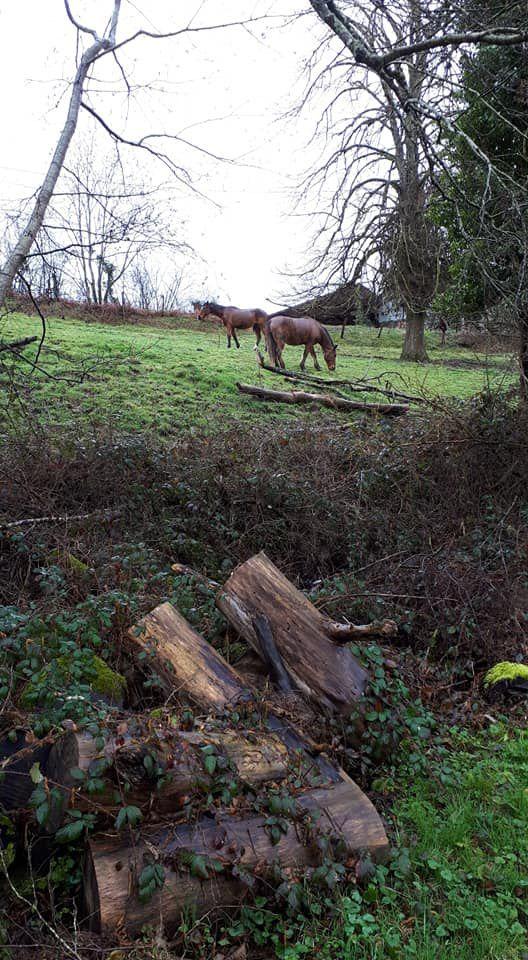 Photo de chevaux prise sur les pentes du GR13 à l'arrivée sur Saint-André en Morvan