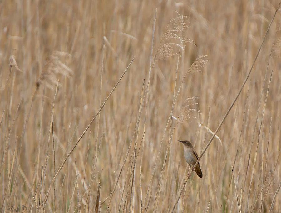 La stridulation du marais - ambiances