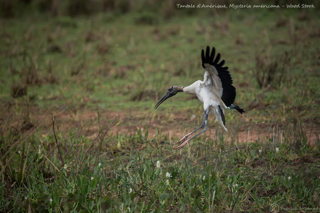 Pantanal - 14 b