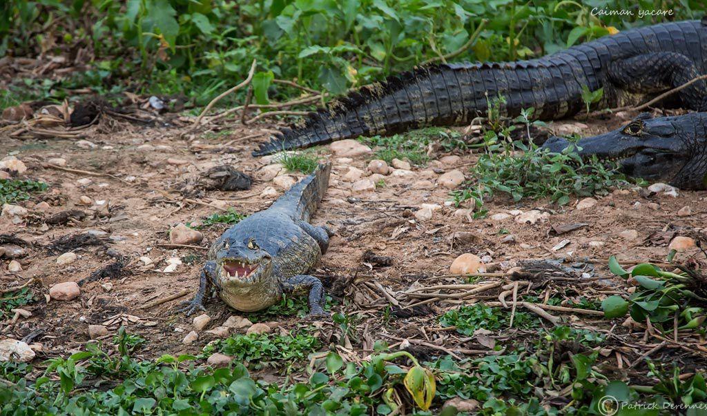 Pantanal - 30 b