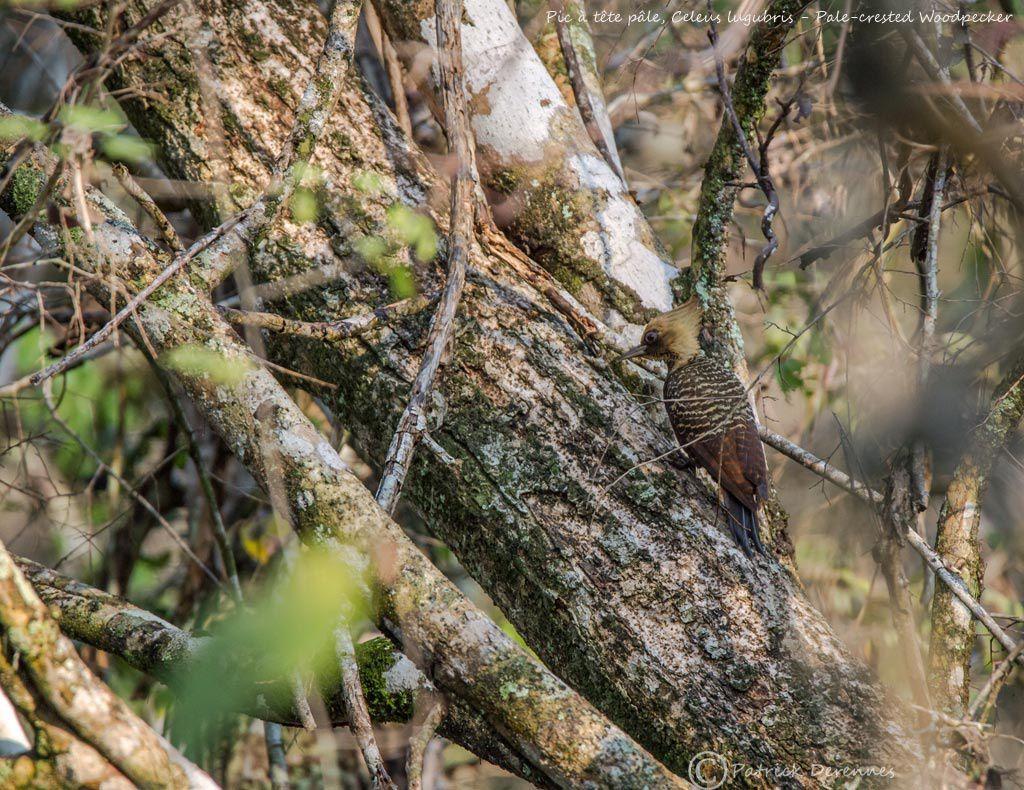 Pantanal - 47