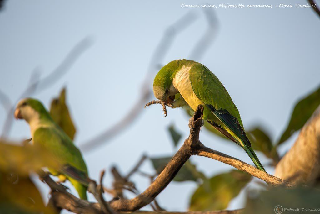 Pantanal - 64