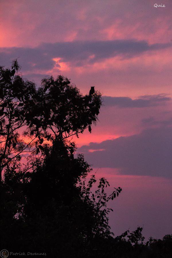 Pantanal - 72 (quiz)