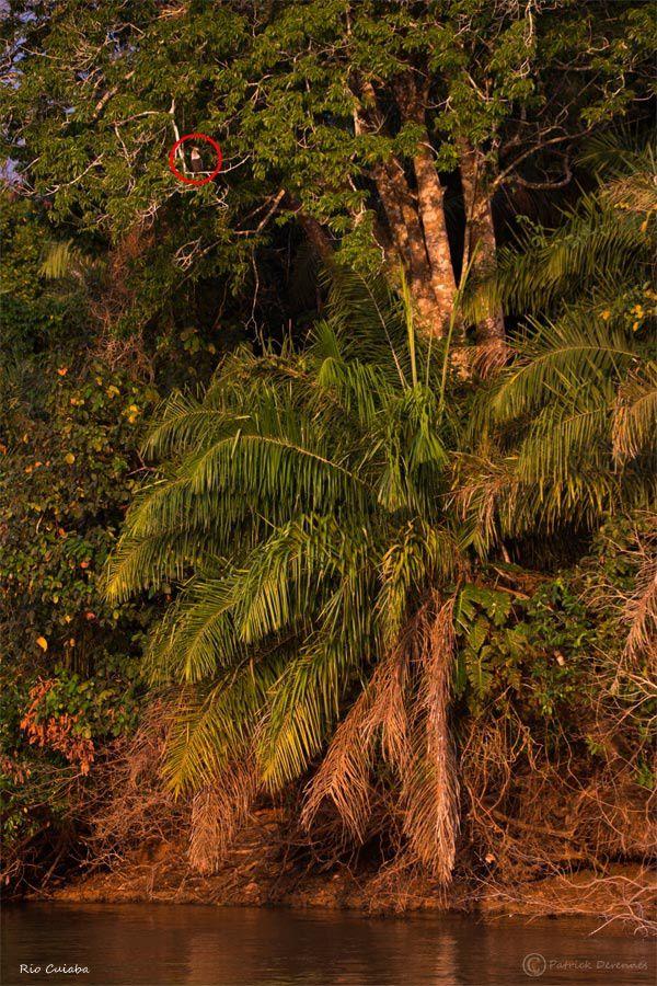 Pantanal - 59 b