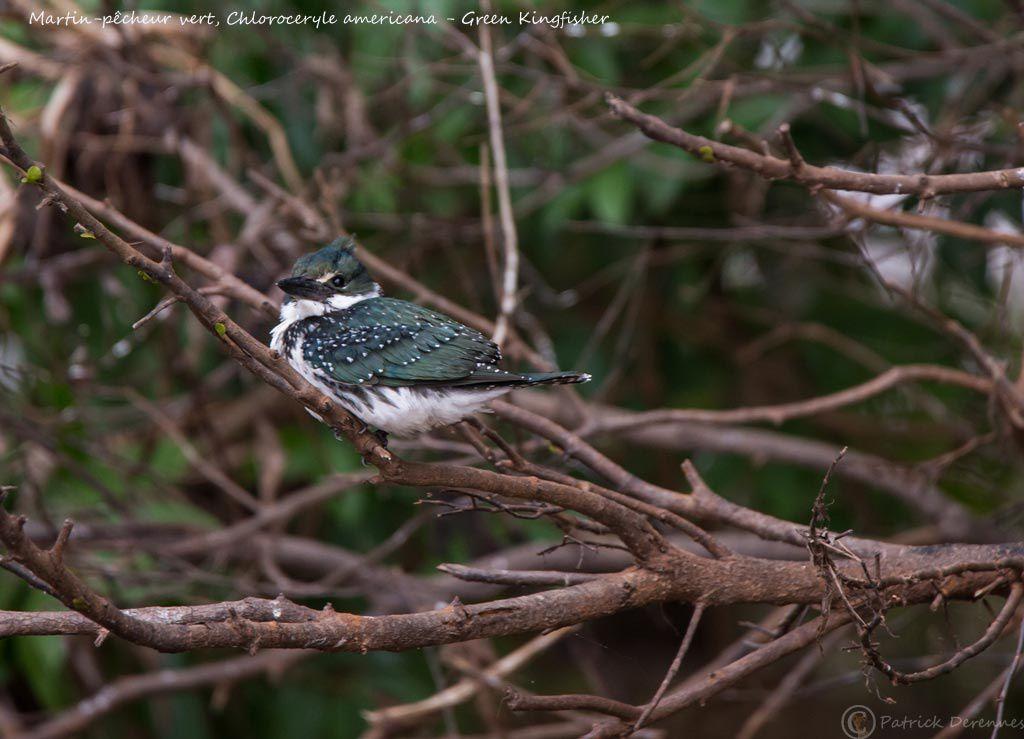 Pantanal - 84