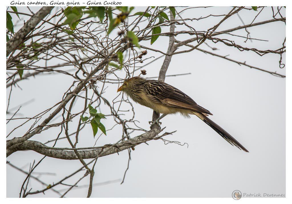 Pantanal - 2 b