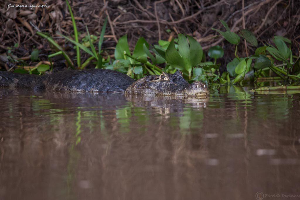 Pantanal - 30 e