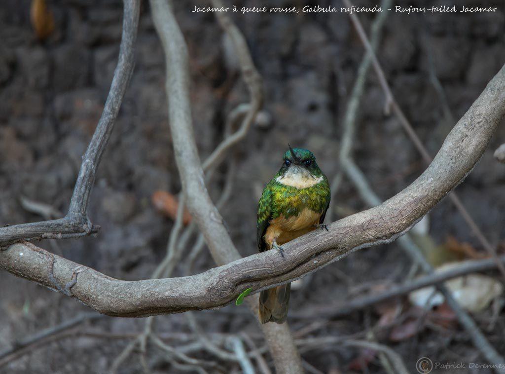 Pantanal - 90