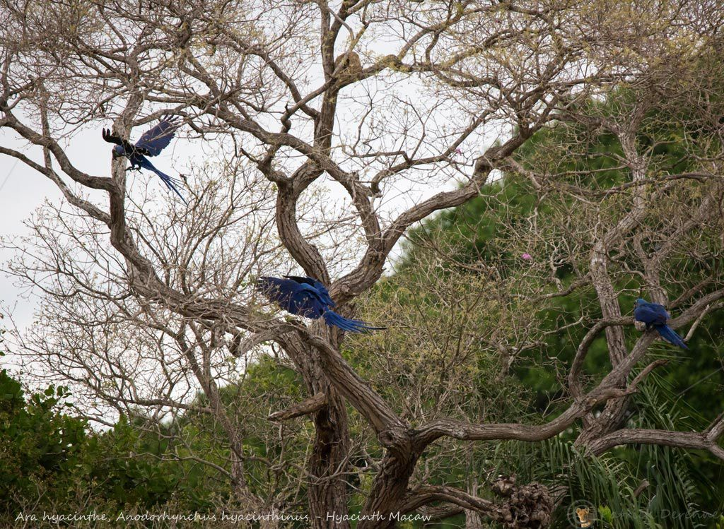 Pantanal - 43 c