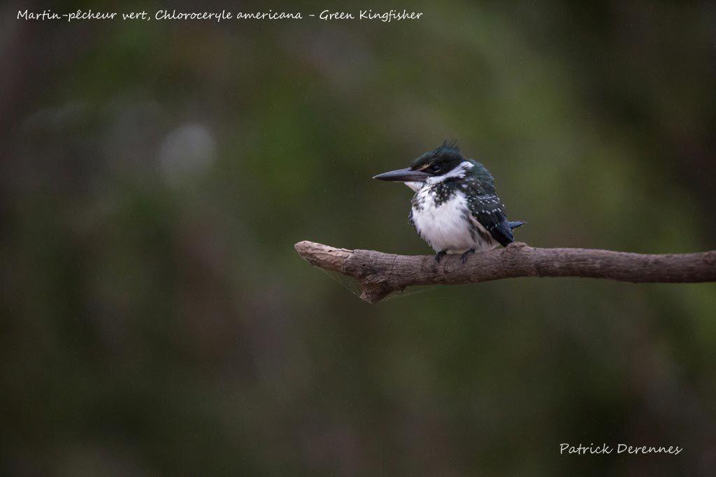 Pantanal - 84 b
