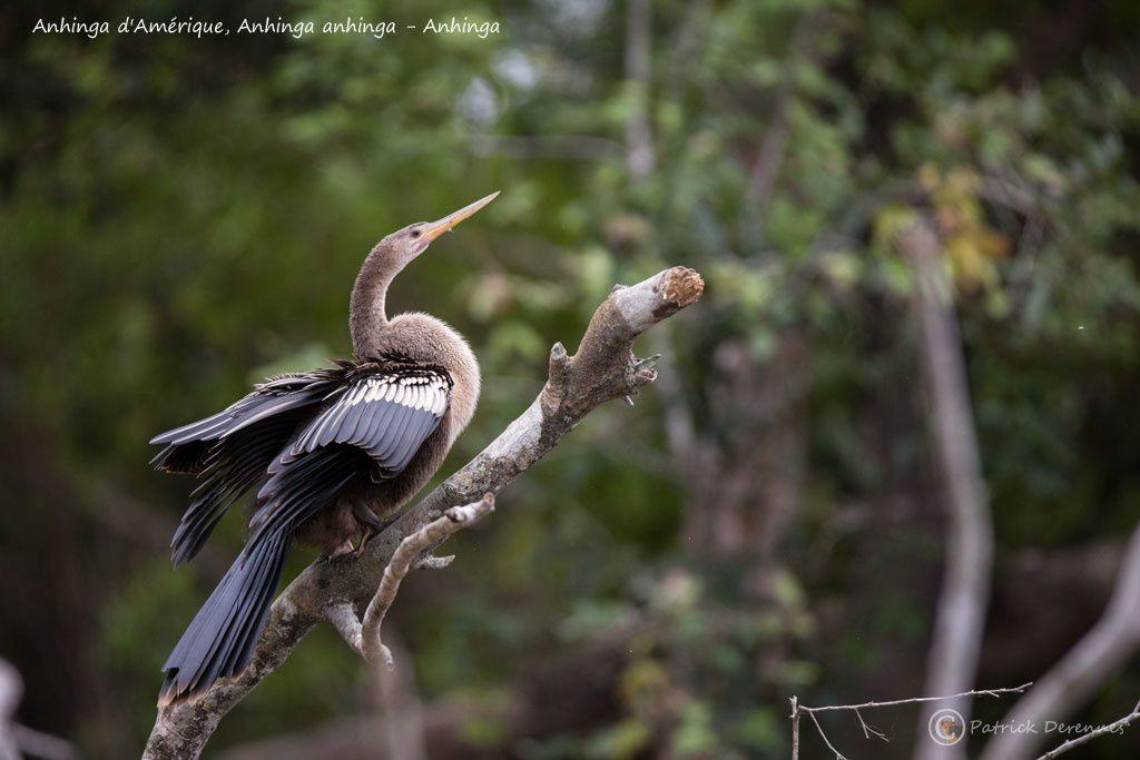 Pantanal - 59 d