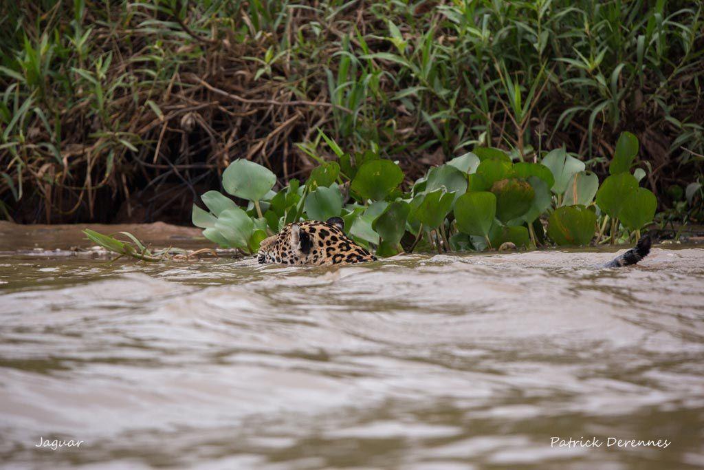 Pantanal - Objectif n°1 f
