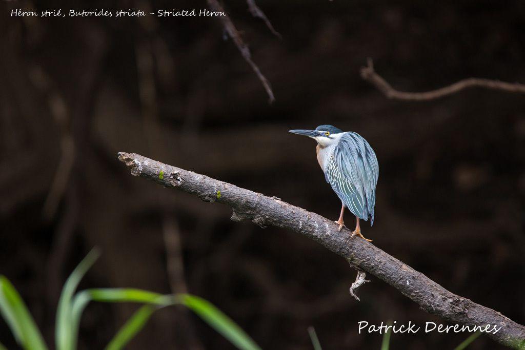 Pantanal - 5 d