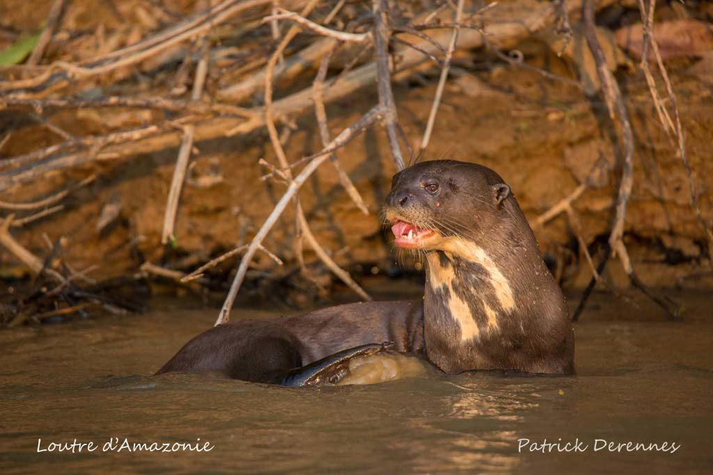 Pantanal - 77 h