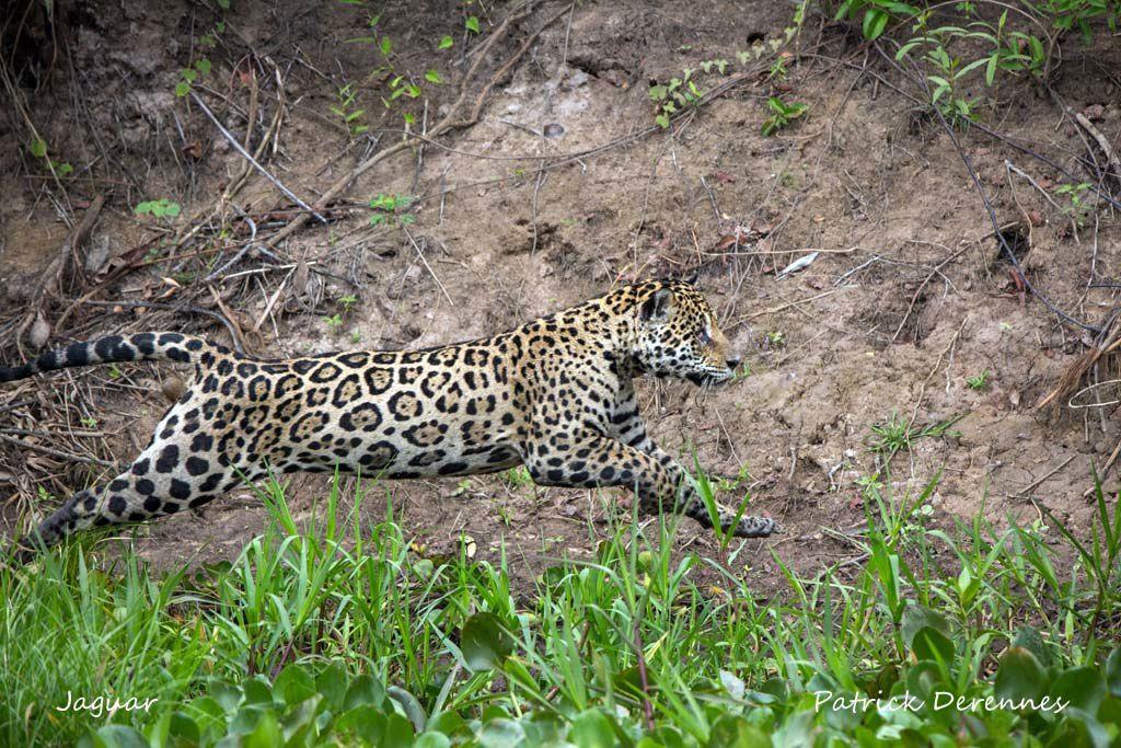 Pantanal - Objectif n°1 j