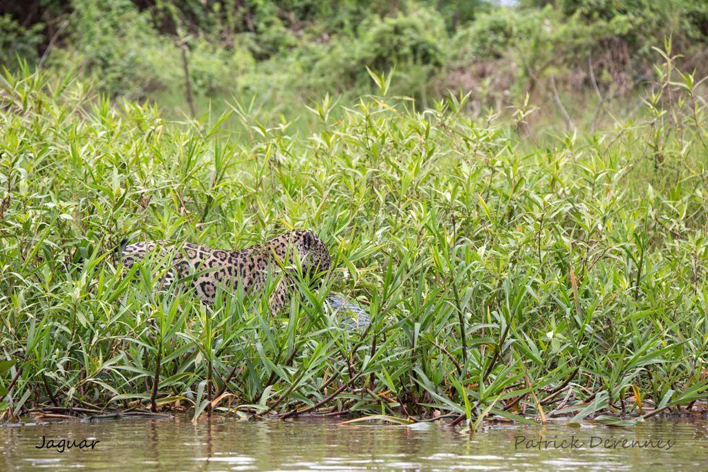 Pantanal - Objectif n°1 - LE FINAL