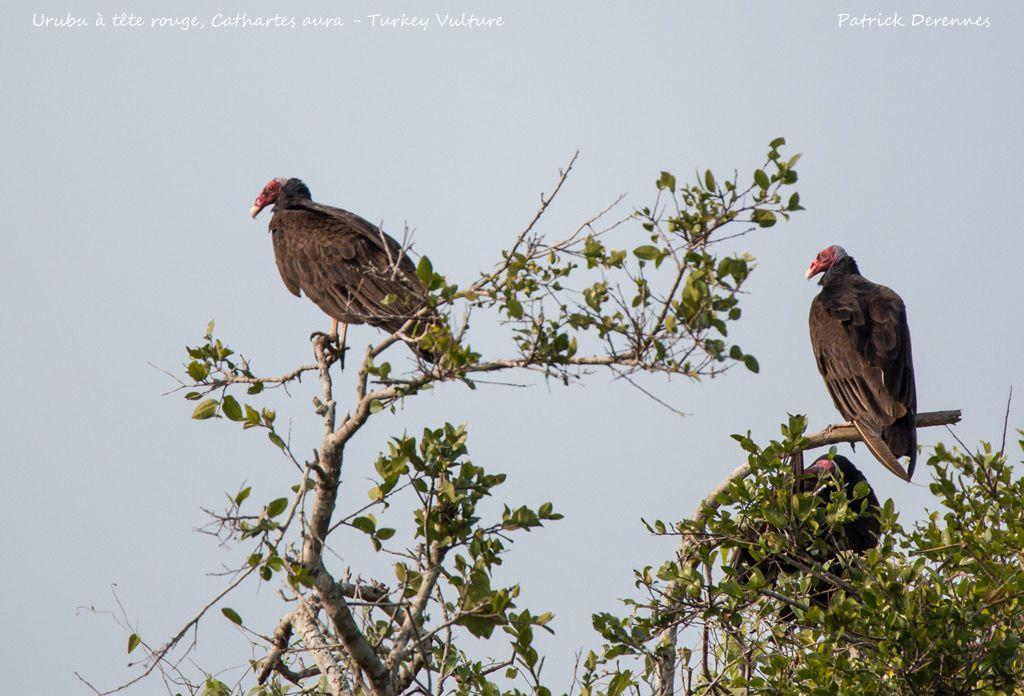 Pantanal - 106