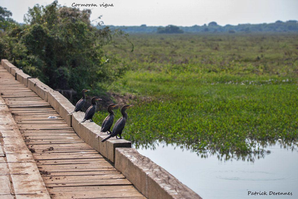 Pantanal - 62 b