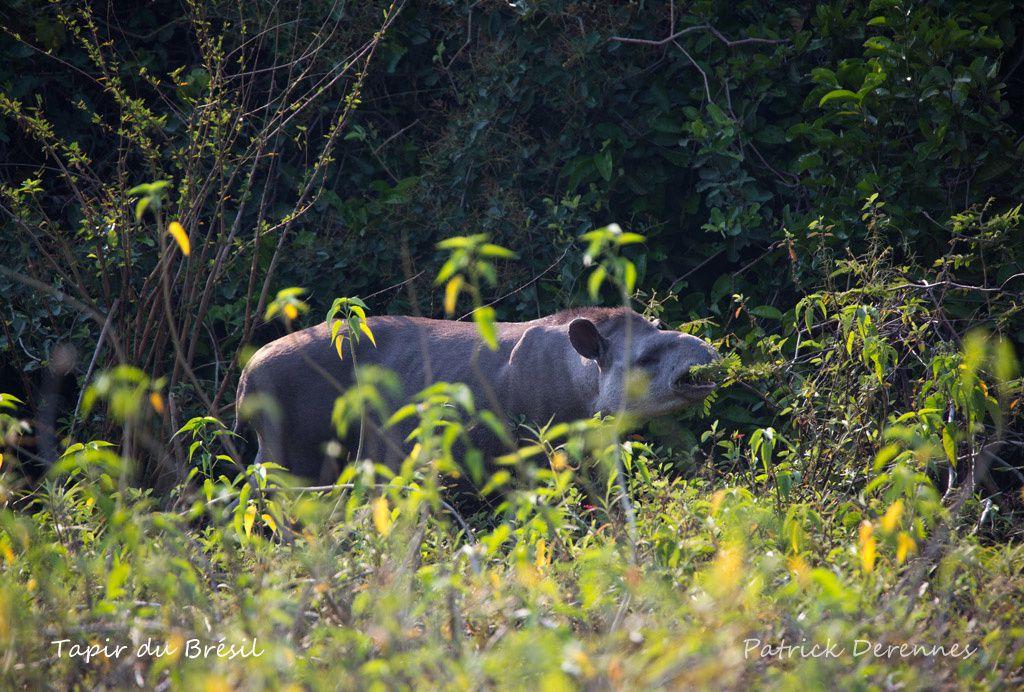 Pantanal - T'as pir comme obs'