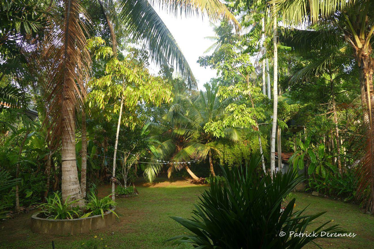 Vacances sri lankaises - 11