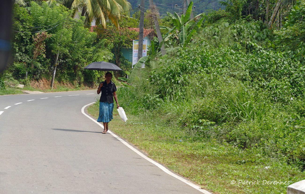 Vacances sri lankaises - road trip in tuk tuk