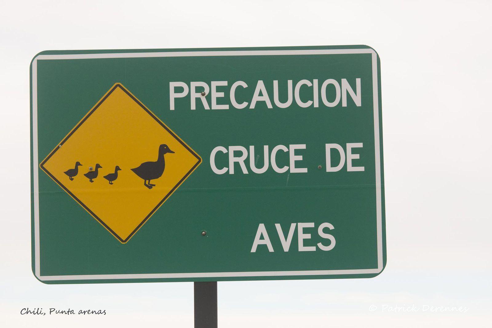 Chili - Punta arenas 1