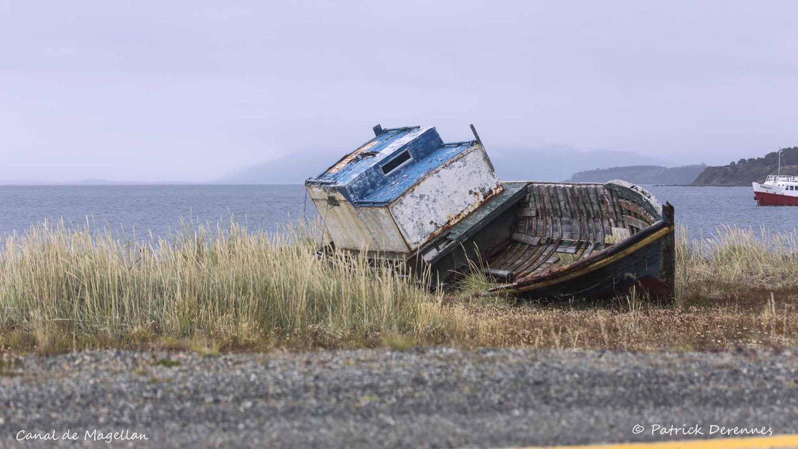 [Chili] Canal de Magellan - Martin-pêcheur à ventre roux