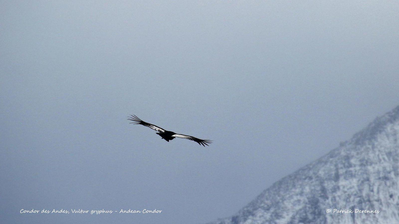 [Chili] Torres del Paine - Condor des Andes 1/3