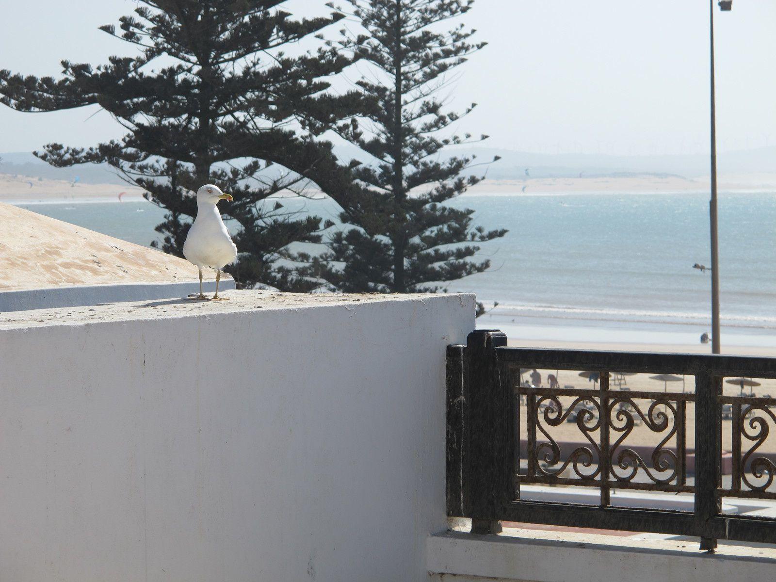 Ein Tag in Essaouira, Marokko