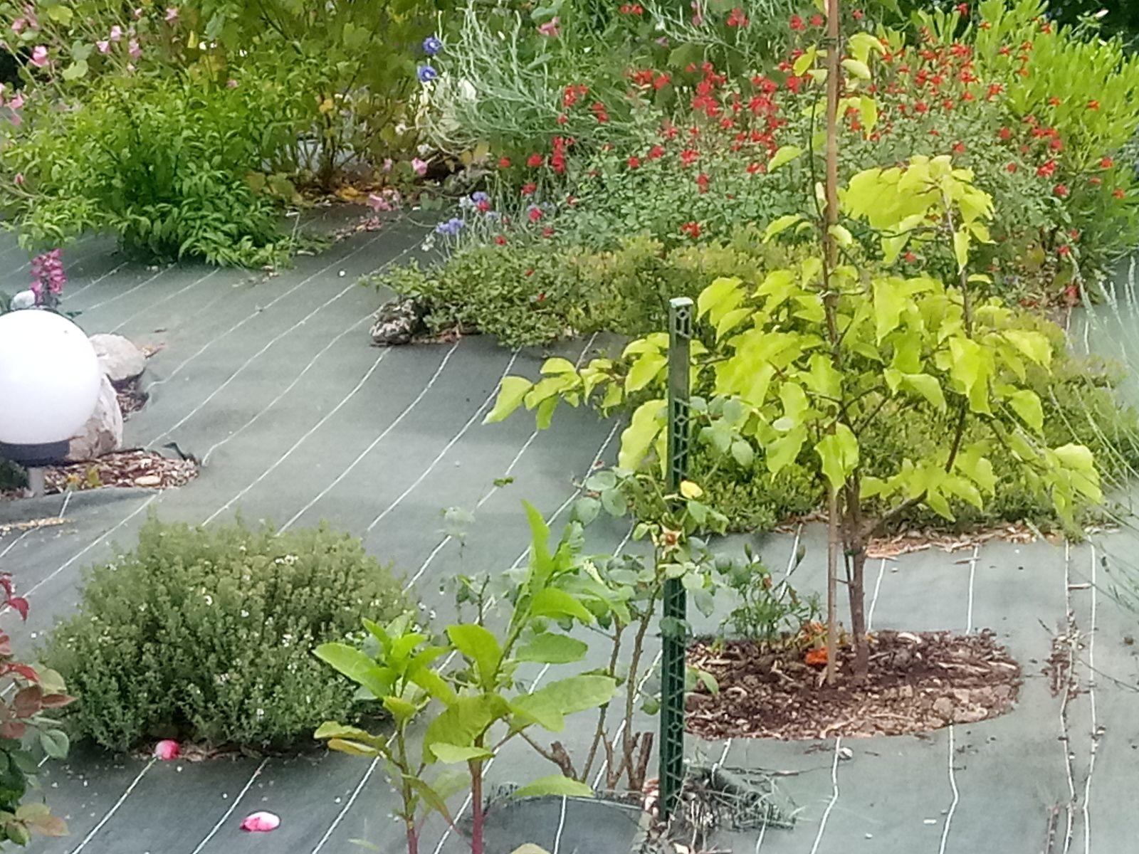 Mon jardin au Printemps
