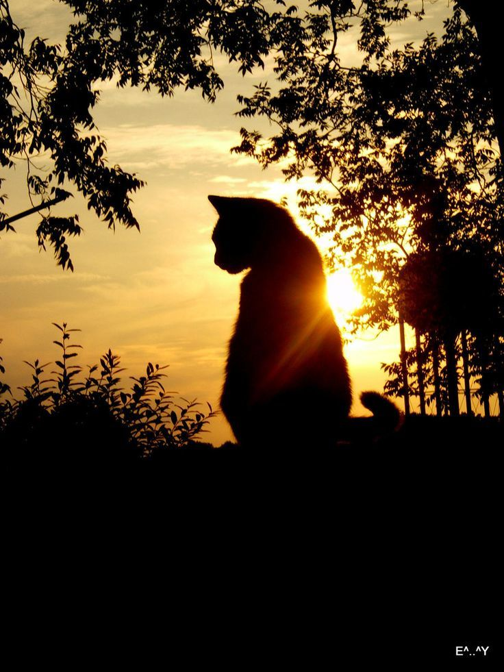 Animaux Chats Pictures Free