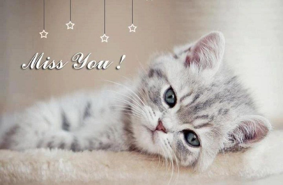 Miss You - Chaton - Cute - Image - Free