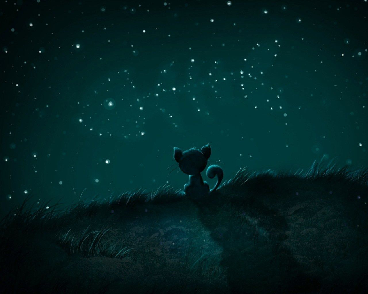 Chat - Nuit - Etoiles - Wallpapers Free