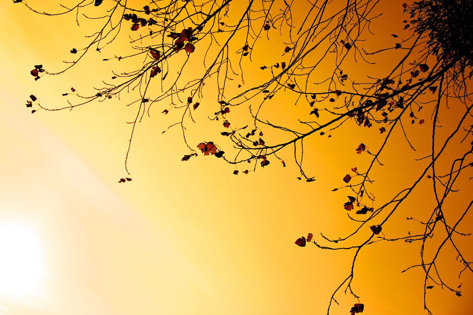 Arbres - Branches - Soleil - Nature - Wallpapers - HD