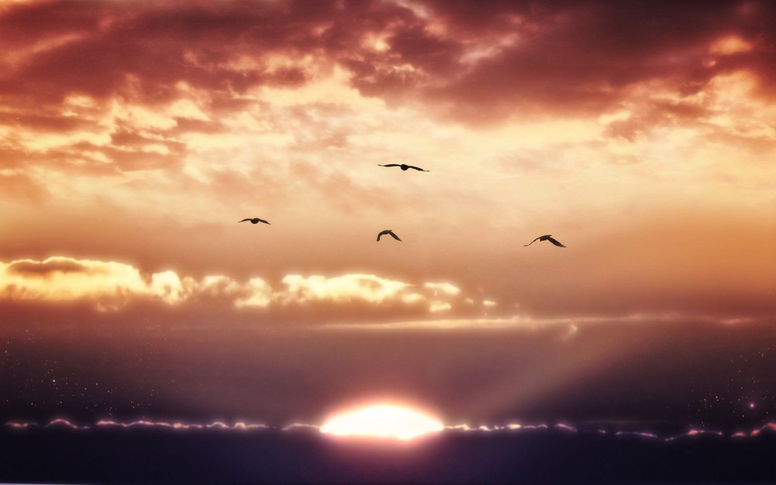 Nature - Horizon - Oiseaux - Wallppapers - HD