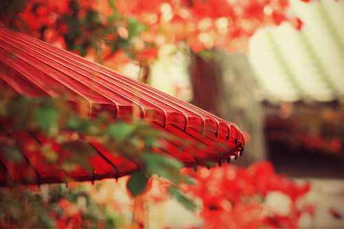 Rouge - Parasol - Picture - Free