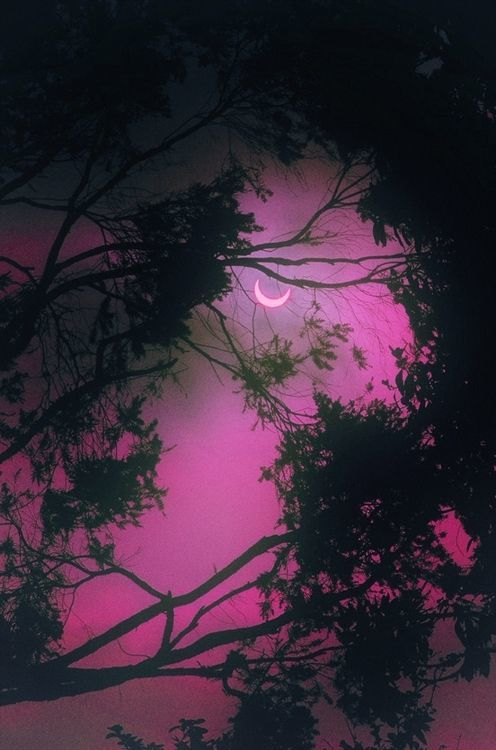 Nuit - Lune - Arbres - Picture - Free