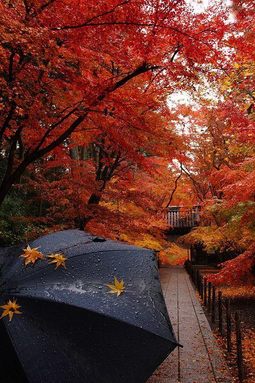 Arbre - Parapluie - Automne - Arbre - Picture - Free