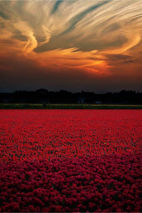Paysage - Nature - Champs - Picture - Free