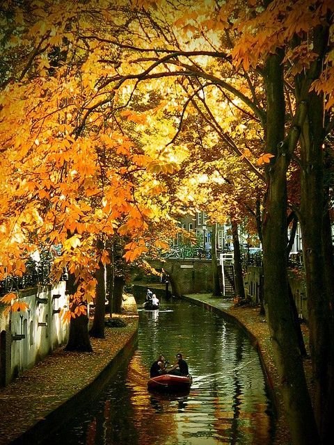 Nature - Canal - Feuillage - Automne - Picture - Free