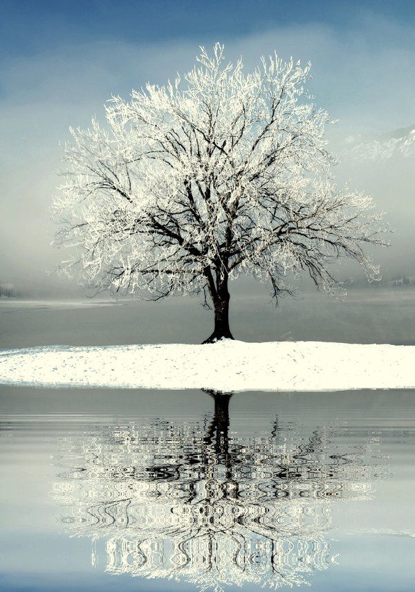 Arbre - Neige - Hiver - Picture - Free