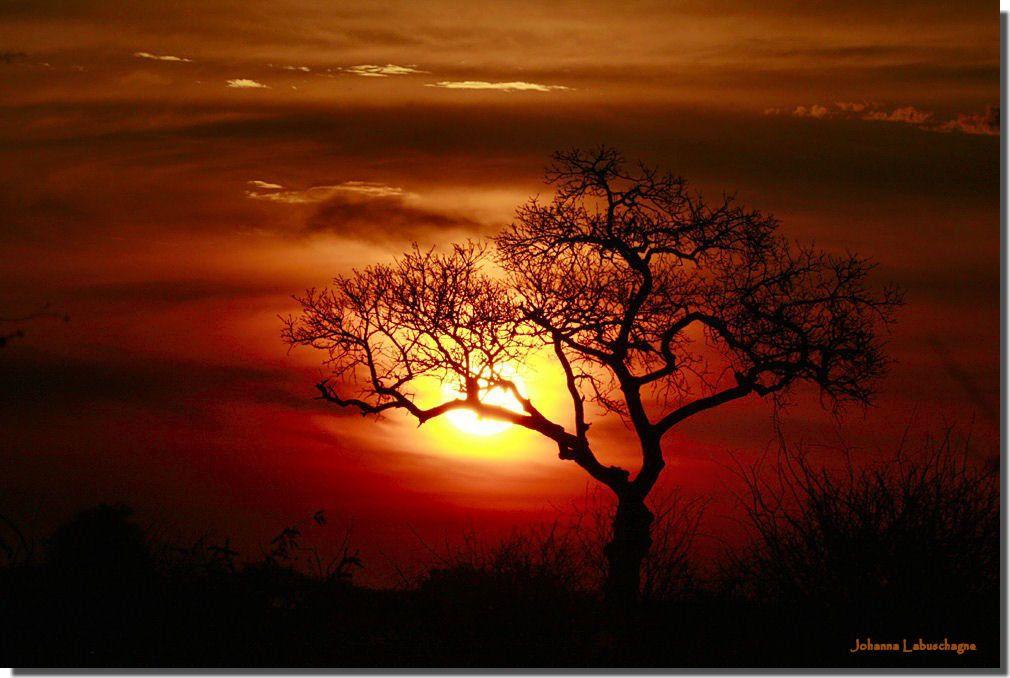 Paysage - Arbre - Coucher de soleil - Wallpaper - Free