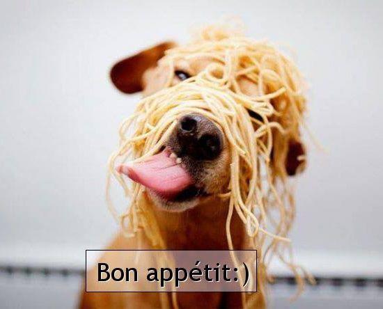 Bon appétit - Chien - Spaghettis - Humour - Picture  - Free